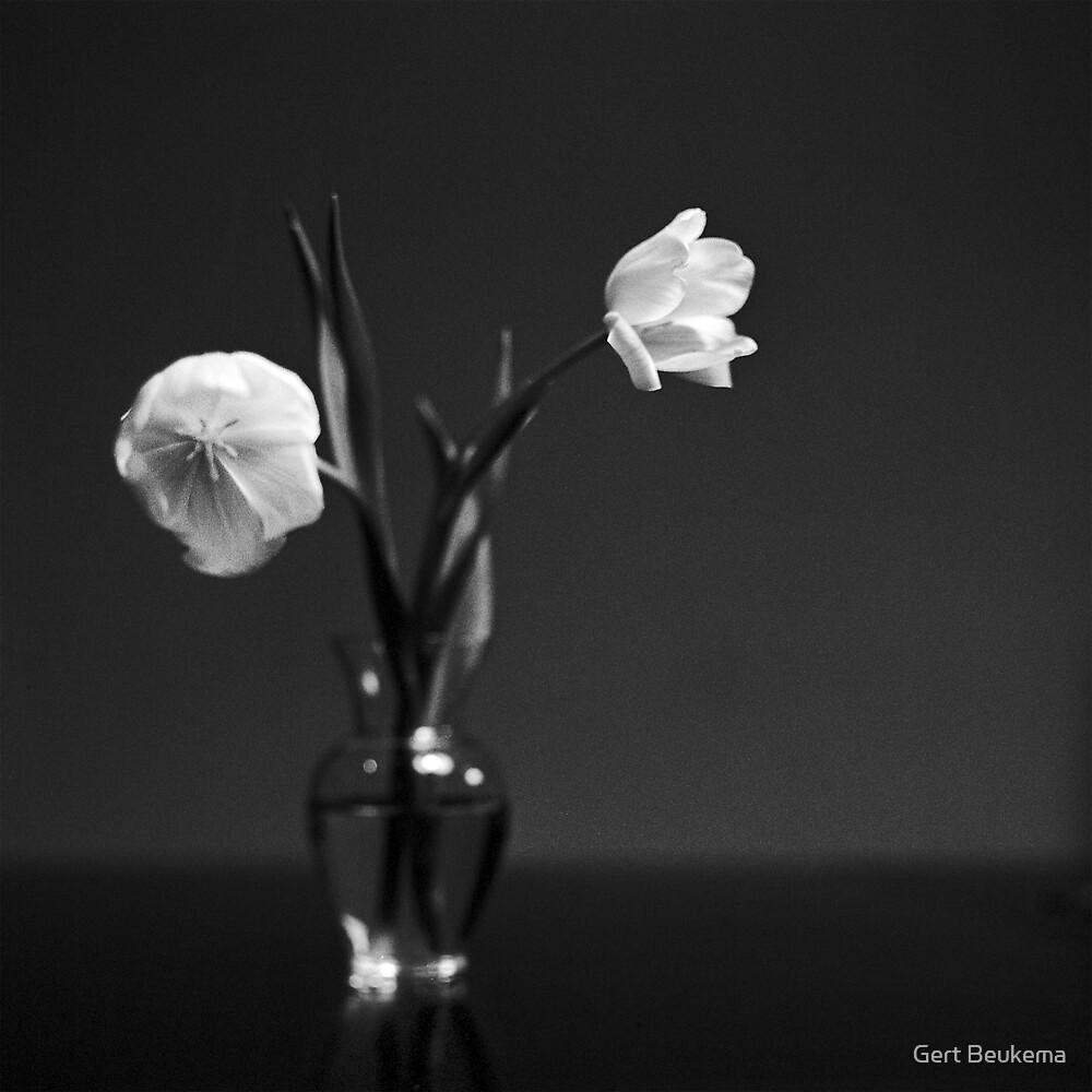 Tulips by Gert Beukema