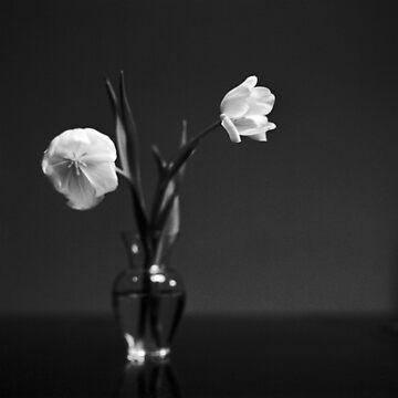 Tulips by de3euk