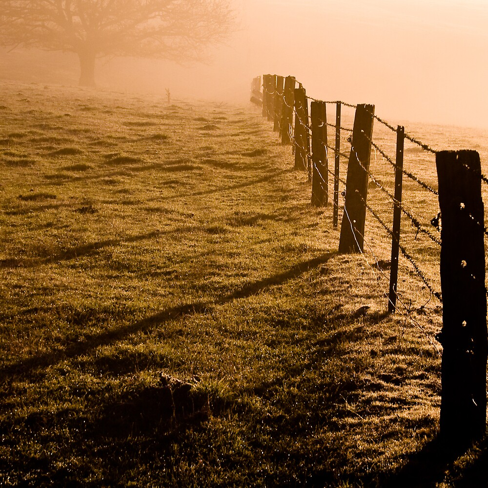 Morning Fence 1 by Matthew James