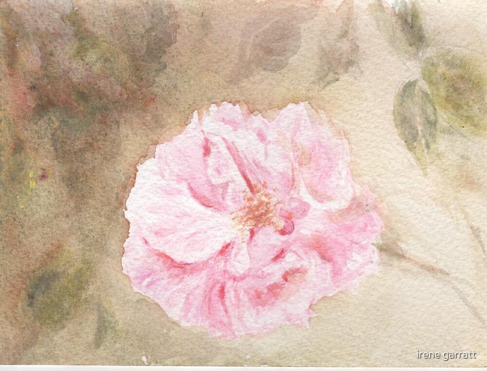 Rosa Dearest by irene garratt