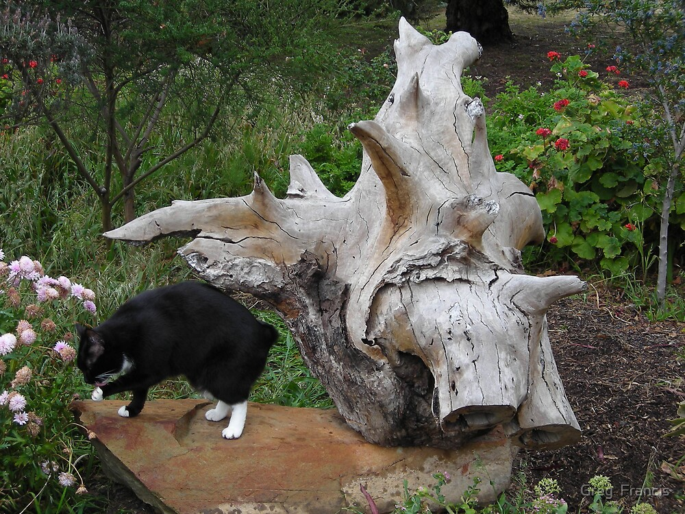Gum Root sculpture & Tiddles by Greg  Francis