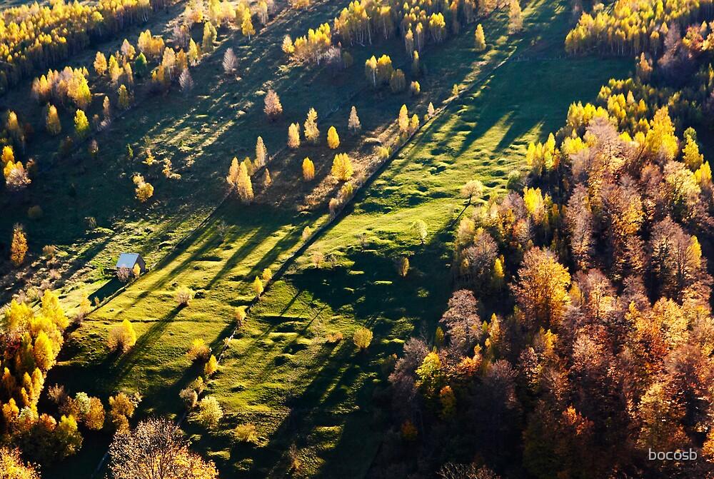 autumn shadows by bocosb