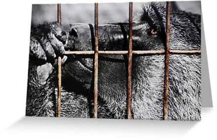 Don't Fence Me In by Laurie Minor