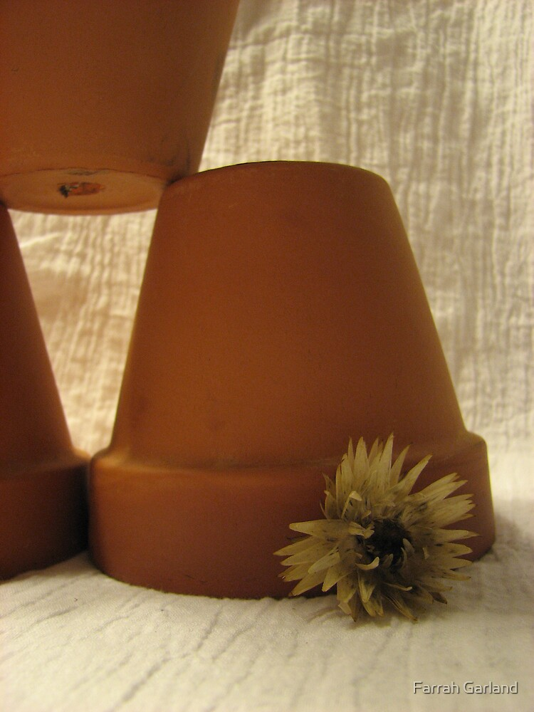 Pots with flower by Farrah Garland