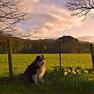 Spring is here by Michael Haslam