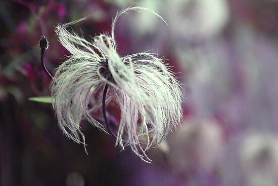 feathery by JennySmith