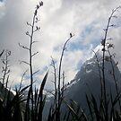 Milford Sound New Zealand by Deeful