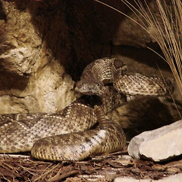 Serpent by DaniMorin519