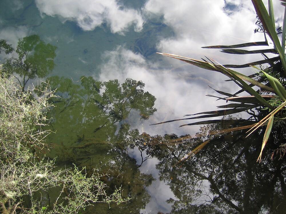 Te Anau New Zealand Mirror Pools by Danielle Murdoch