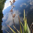 Te Anau New Zealand Mirror Pools by Deeful