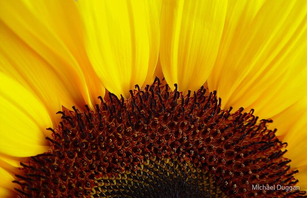 Shinning Sun by Michael Duggan