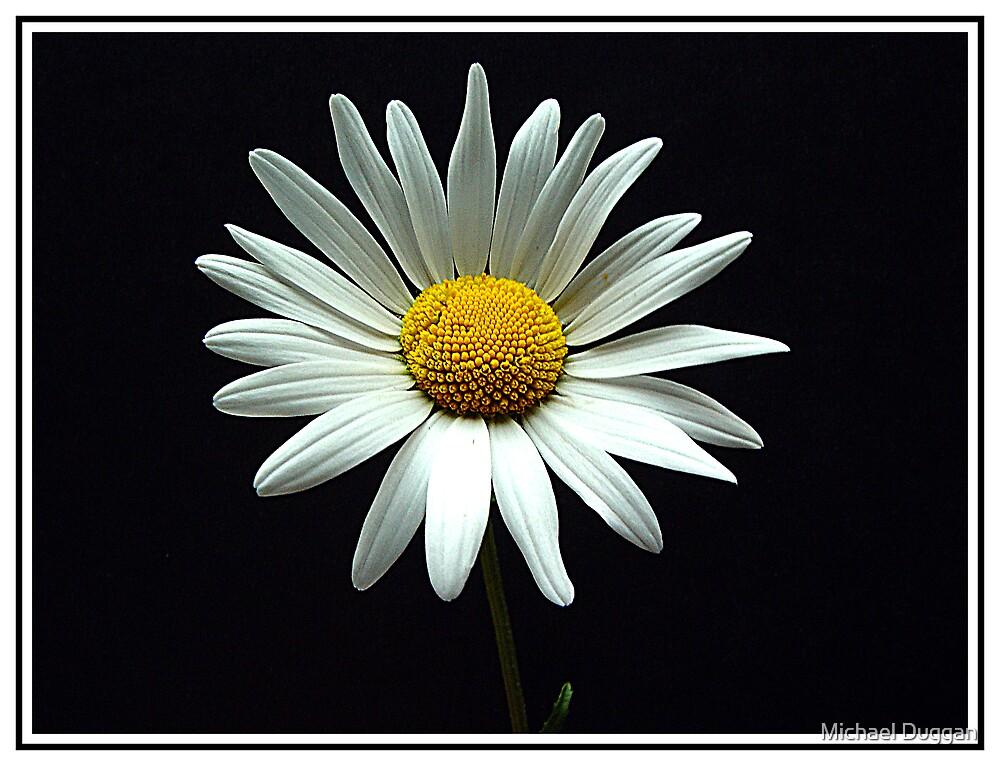 Daisy by Michael Duggan