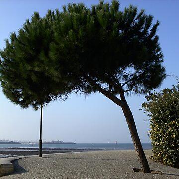 Tree by Joanna16