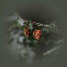 Pinecones by Debra Fedchin