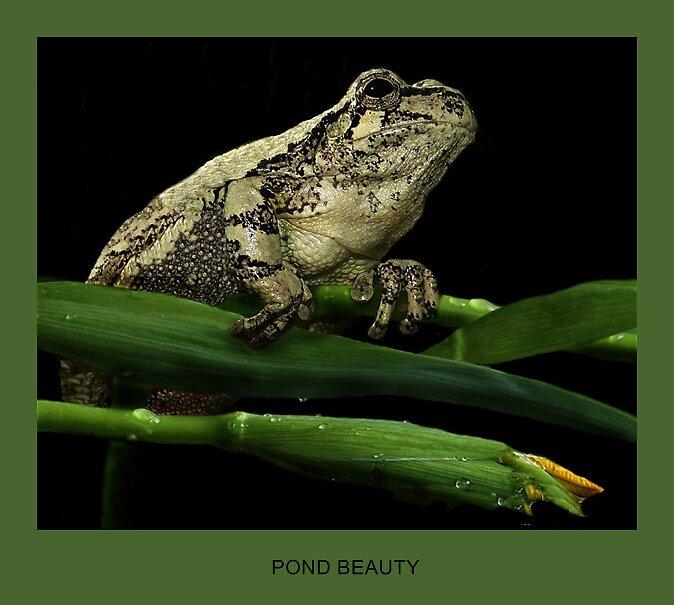 Pond Beauty by Birte