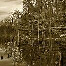 Pond Reflections by Debra Fedchin
