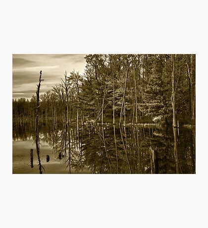 Pond Reflections Photographic Print