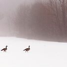 March of the Canadian Geese by Debra Fedchin