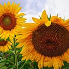 Sunflower Mama & her Daughters by Debra Fedchin
