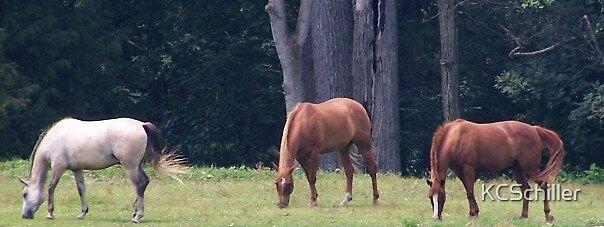 Pasture Friends by KCSchiller