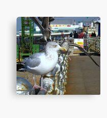 The Gull Queue Canvas Print