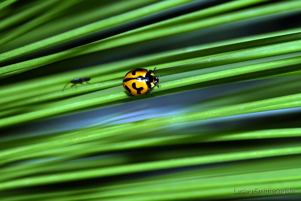 Catch me if you can! by Lesley Smitheringale
