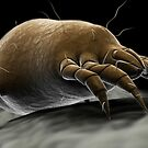 Microscopic visualization of a dust mite. by StocktrekImages