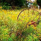 A wee bit overgrown by Debra Fedchin