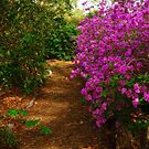 Spring Blooms by Debra Fedchin