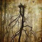 The Spookiest Tree in the Woods by Debra Fedchin