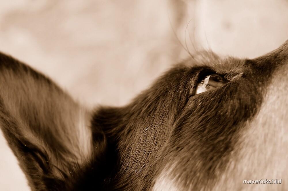 Hopeful Pooch by maverickchild