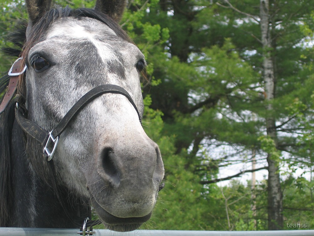 Grey Horse by teahss