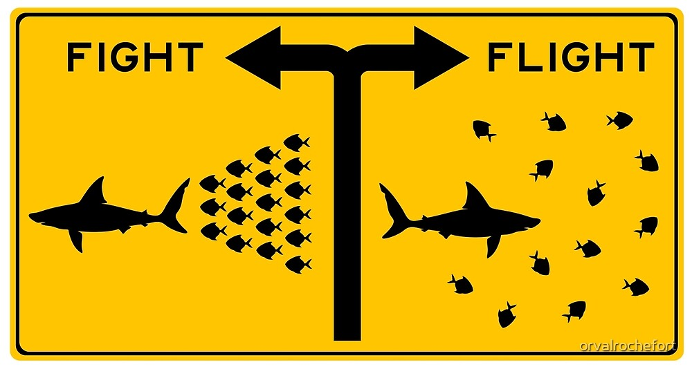 fight or flight sharks fish by orvalrochefort