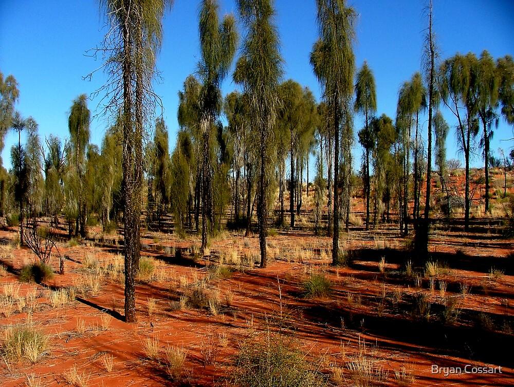 The Desert Oak by Bryan Cossart