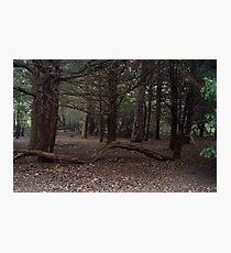 Dark Wood Photographic Print
