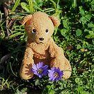 Ted Brings You Wood Anemones by Susie Peek