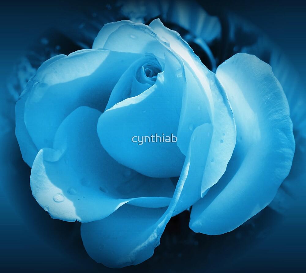 blue rose by cynthiab