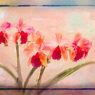 Orchid Flow by Marilyn Cornwell