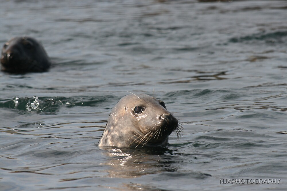 a friendly seal by NJAPHOTOGRAPHY
