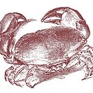 Vintage Crab Illustration by Edward Fielding