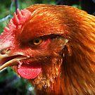 Attila the Hen by VenusOak