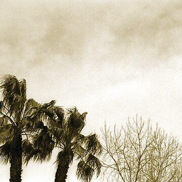 windy by Talvikki