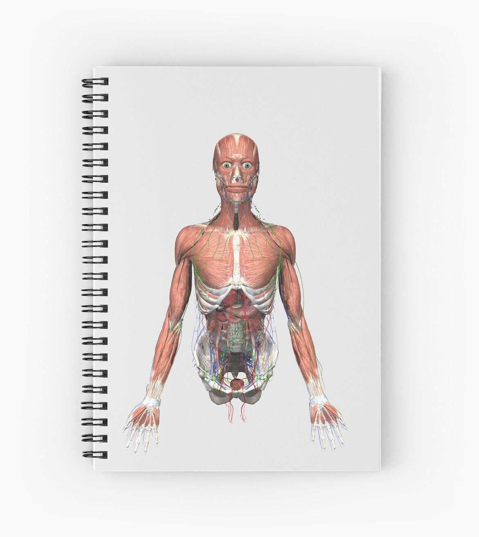Cuadernos de espiral «Ilustración del torso humano superior con ...