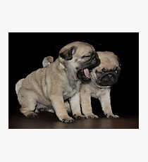 Dogs Breath Photographic Print