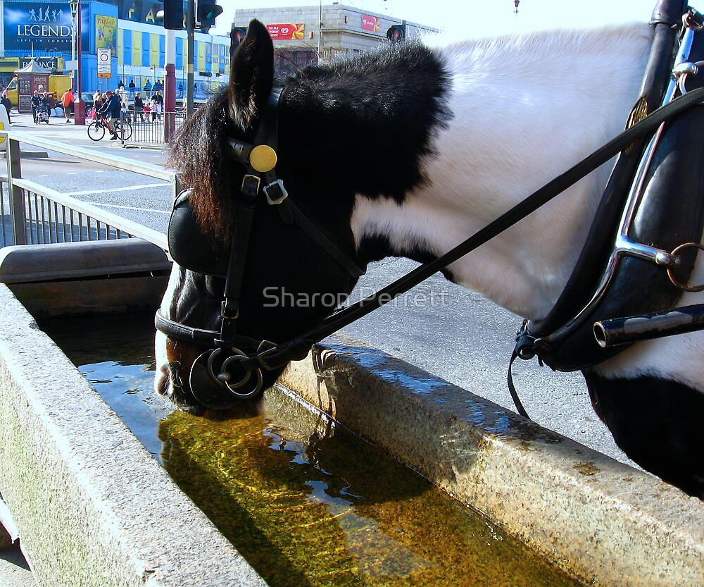 Thirsty Work by Sharon Perrett