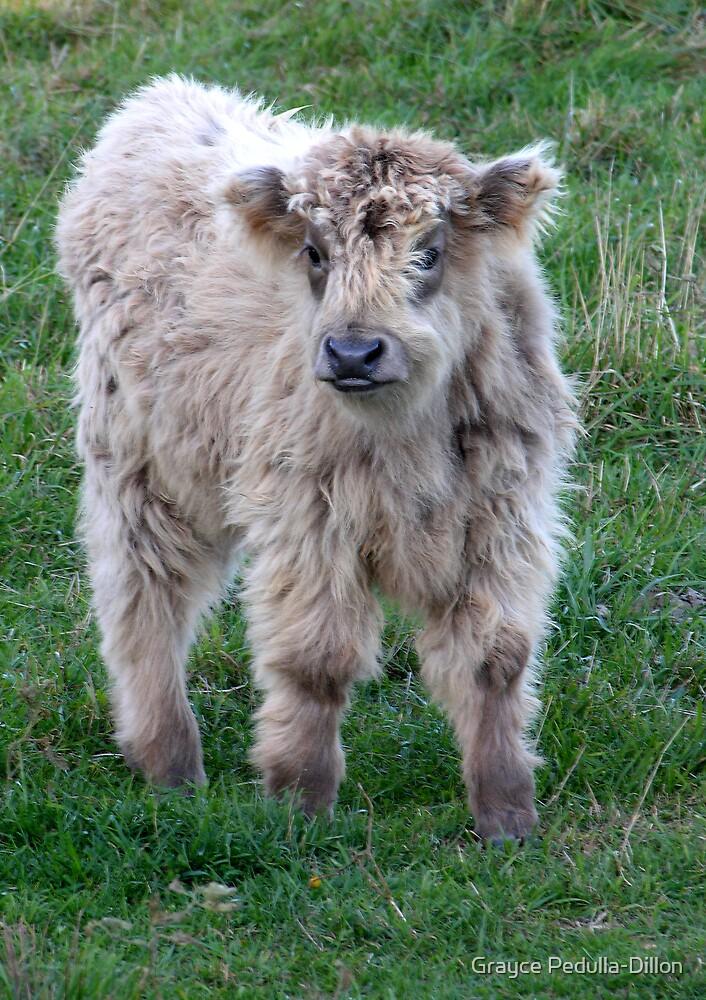 Calf by Grayce Pedulla-Dillon