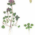Red Deadnettle - Lamium purpureum by Sue Abonyi