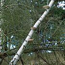 Tree Fungus by Debja