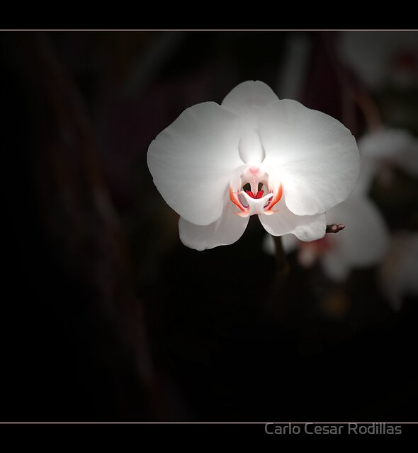 My Lips Are Yours To Kiss by Carlo Cesar Rodillas