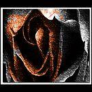 The odd Rose by zee1